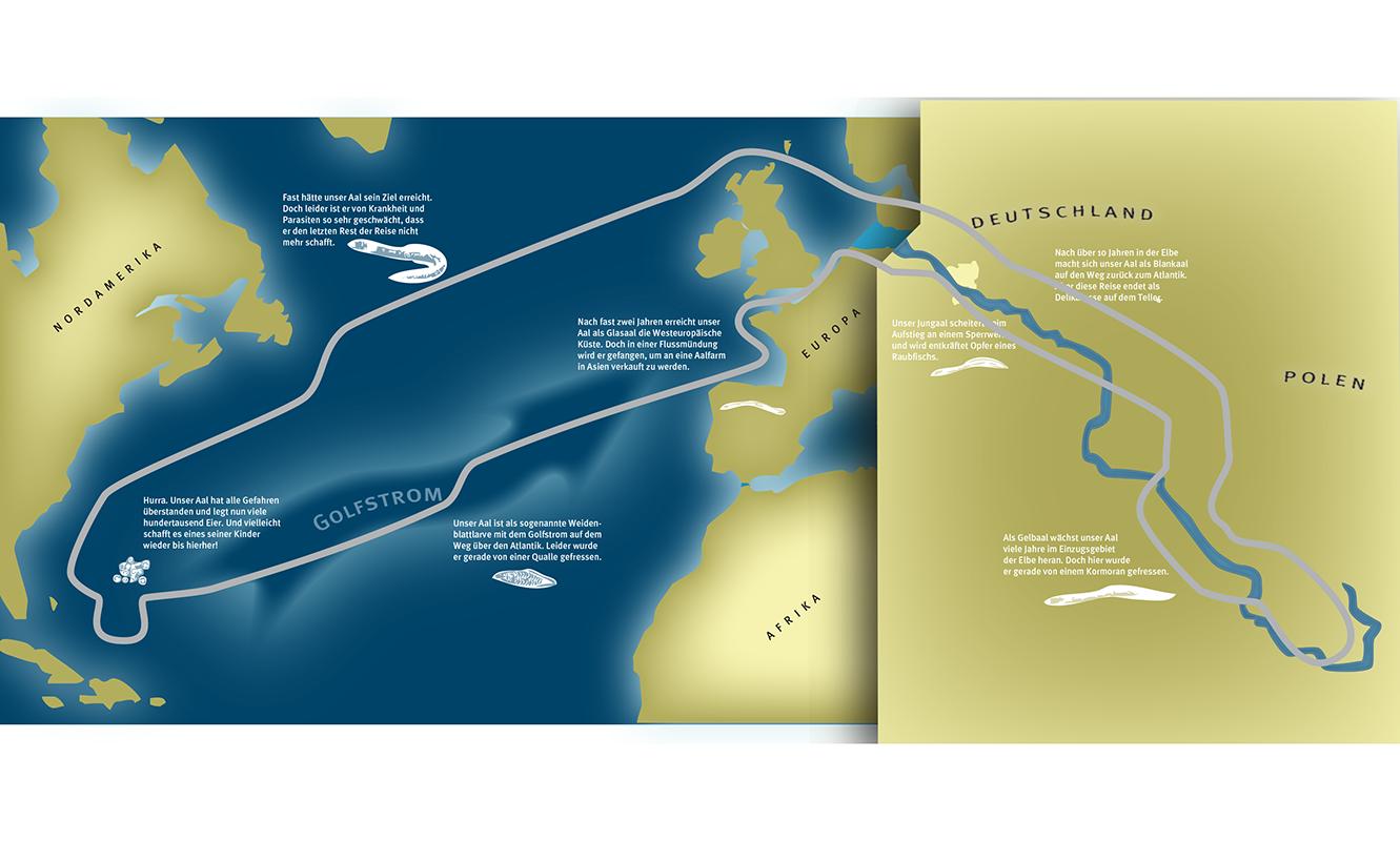 Aalwanderung Modell