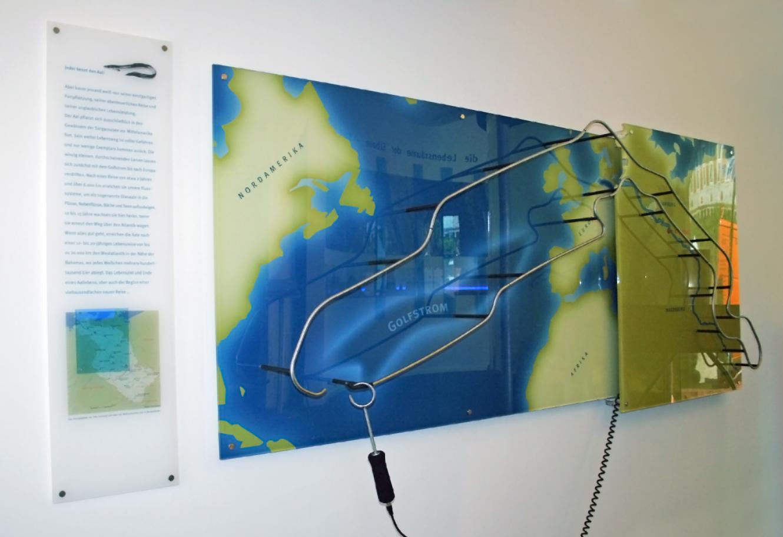 Aalwanderung interaktives Ausstellungsmodul